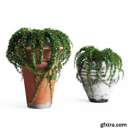 Ivy In Pots 3D MODEL