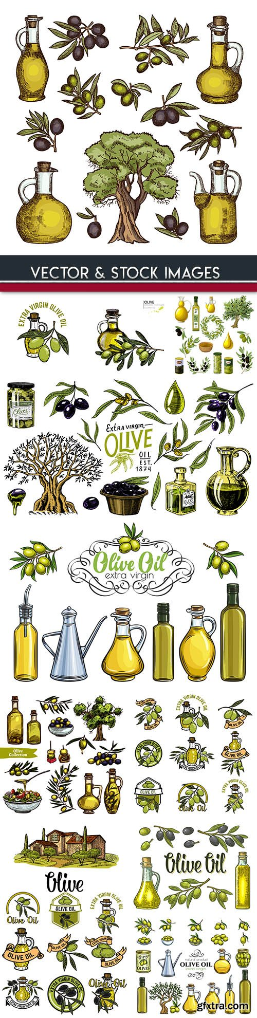 Olive oil and branch and olive sketch illustrations