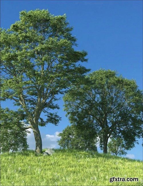 Daz3D - UltraTrees - Realistic Tree System
