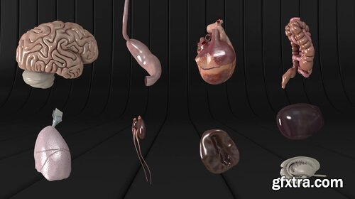 Videohive - Human Body and Organs - 20727612