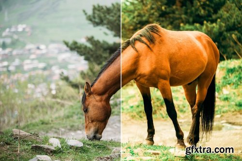 CreativeMarket - Animal LR Mobile and ACR Presets 4170065