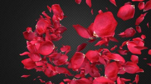 Videohive - Rose Petal Transitions Pack