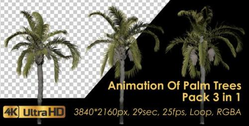 Videohive - Animation Pack Of Palm Trees