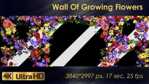 Videohive - Wall Of Growing Flowers