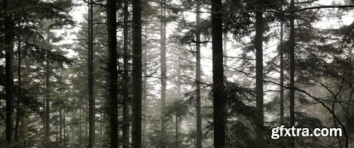 Painting Landscapes : A Watercolor Misty Forest