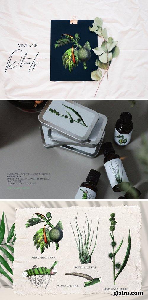Retro green plant - botany set