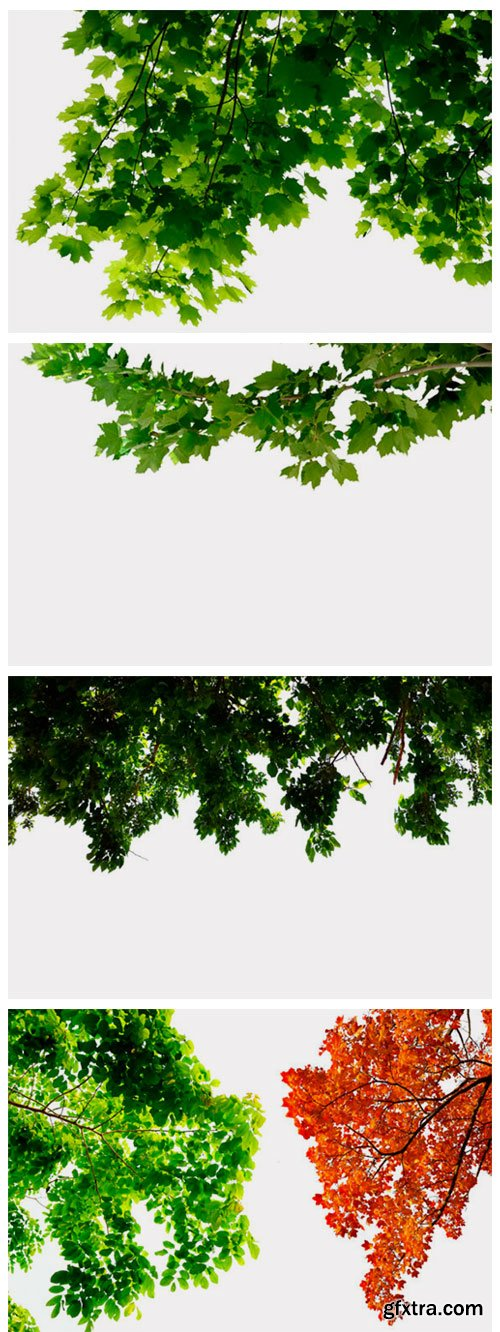 175 Green Tree Branches Overlays 3012062