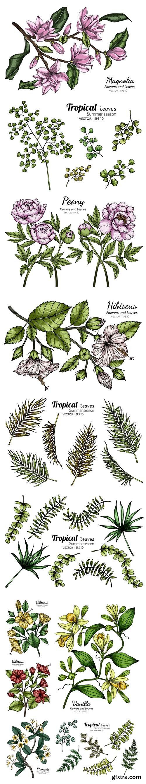 Collection of Tropical and other Leaf Drawing Illustration