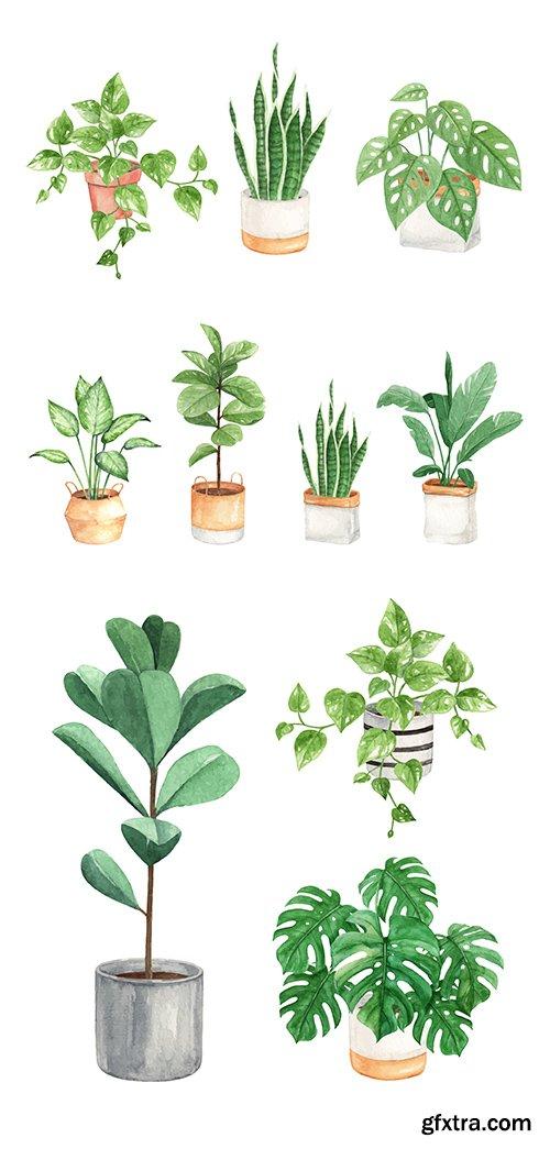 Hand Painted Watercolor Indoor Plants