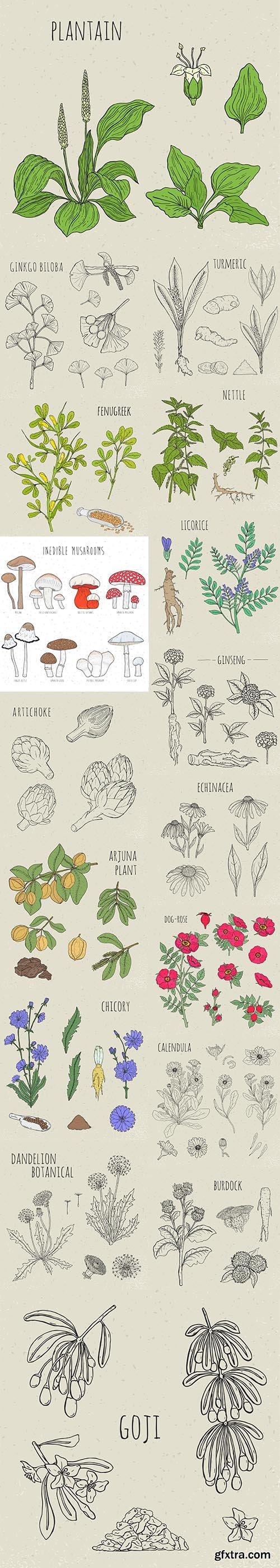 Medical Botanical Isolated Illustration Plant Flowers Leaves Hand-Drawn Set