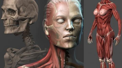 Udemy - Female Anatomy Sculpting in Zbrush