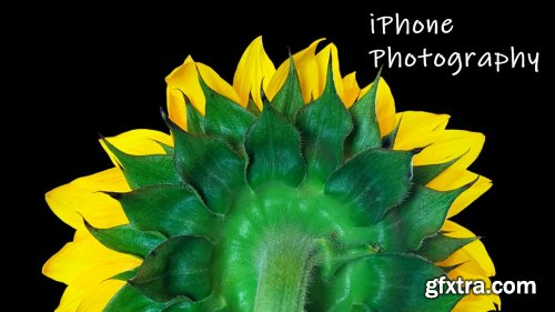iPhone Photography: Use your iPhone Camera to its Full Potential!