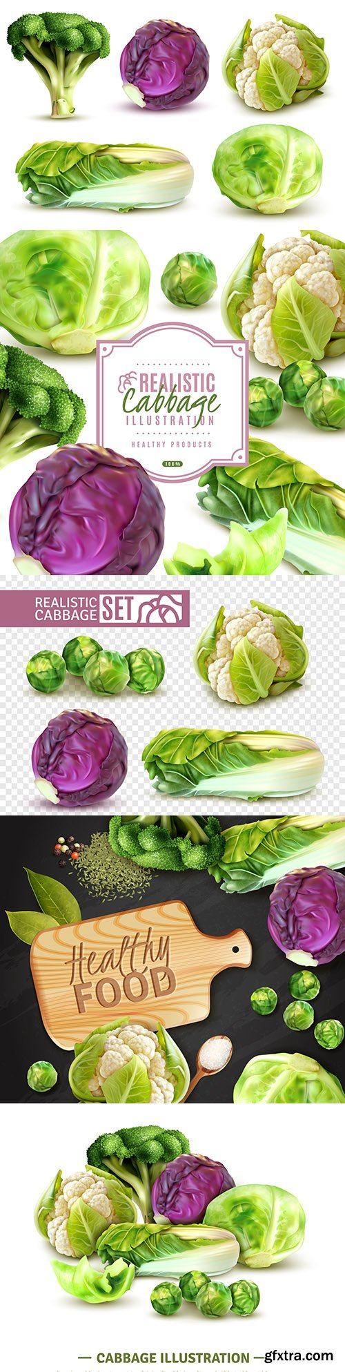 Brussels, Chinese and cauliflower realistic set illustrations