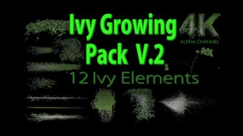 Videohive - Ivy Growing Pack 4 K V2