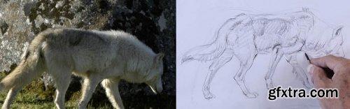 How to Draw Animals With Glenn Vilppu