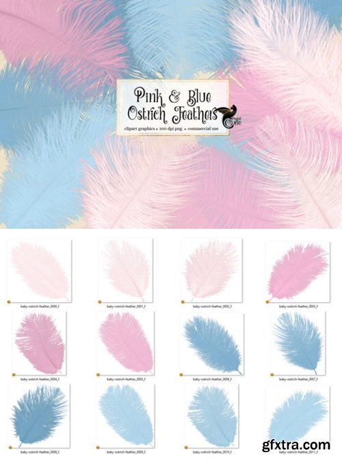 Pink and Blue Ostrich Feathers Clipart 4167479