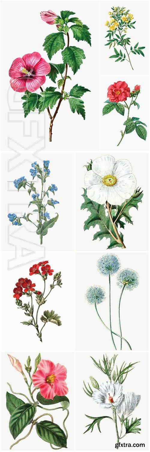 Set of beautiful blooming vector flowers # 2