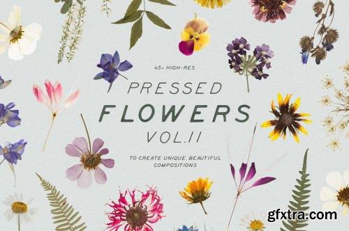 CreativeMarket - BUNDLE - Dry Flowers & Leaves 4592866