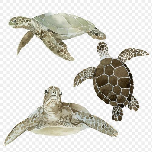 Watercolor painted sea turtle transparent png - 2097715