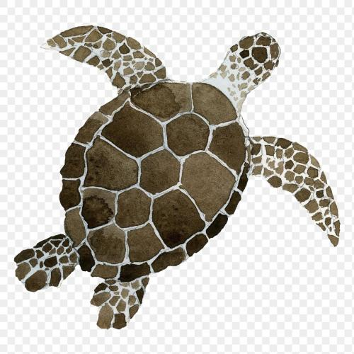 Watercolor painted sea turtle transparent png - 2045281