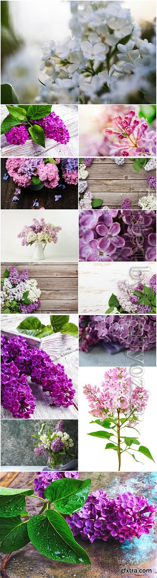 Lilac branches beautiful stock photo