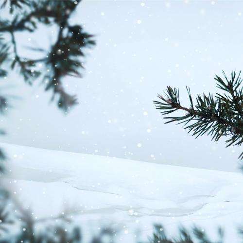 Pine branches in a snowy day background - 1229631