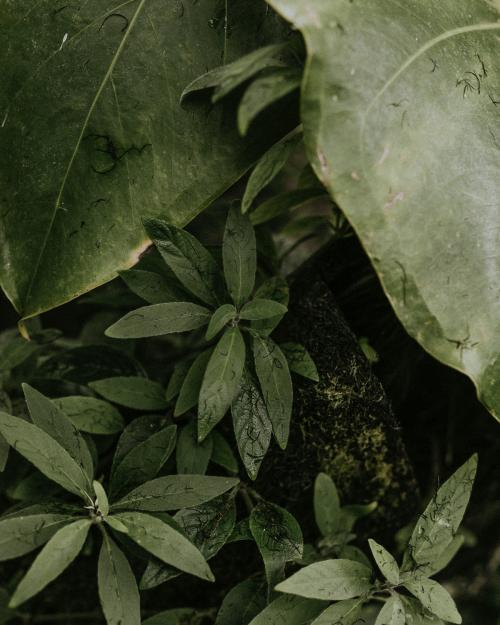 Various tropical leaves in a garden - 598243