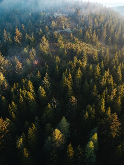 Drone view of Whinlatter Forest park at the Lake District in England - 935834