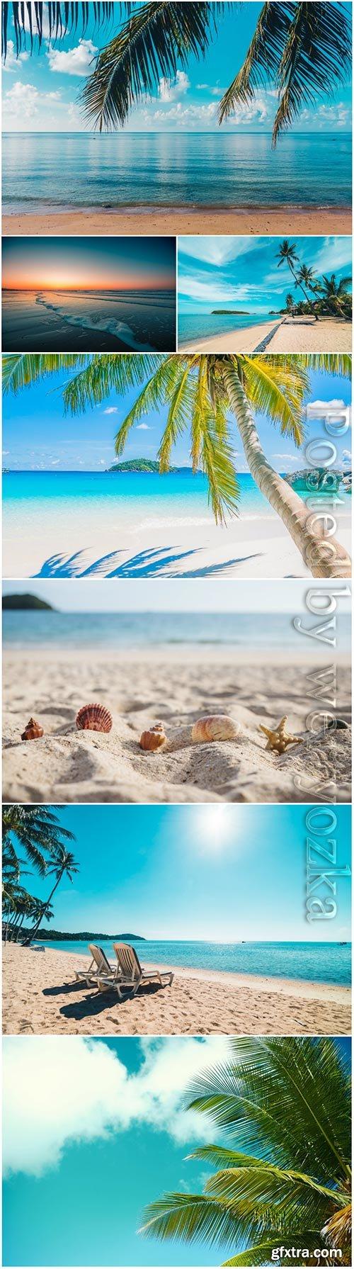 Beautiful tropical beach sea with coconut palm tree stock photo