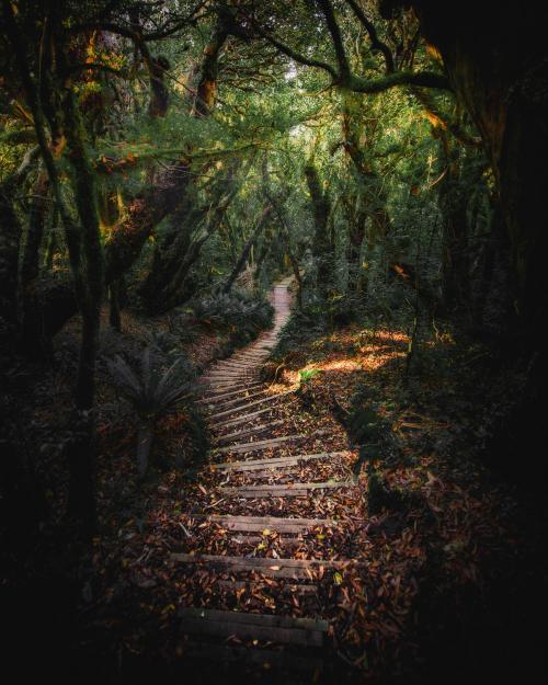 Stairway on Mount Taranaki, Egmont National Park, New Zealand - 1204727