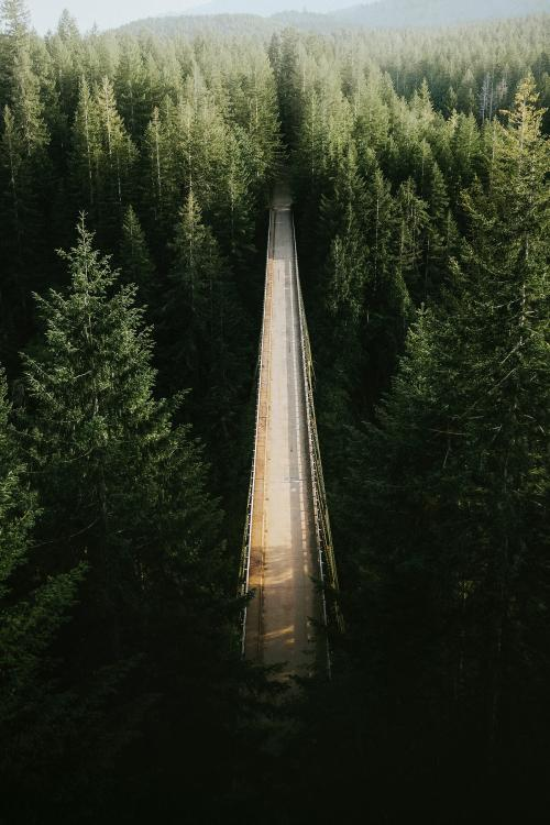Bridge over a river in a forest - 1204780