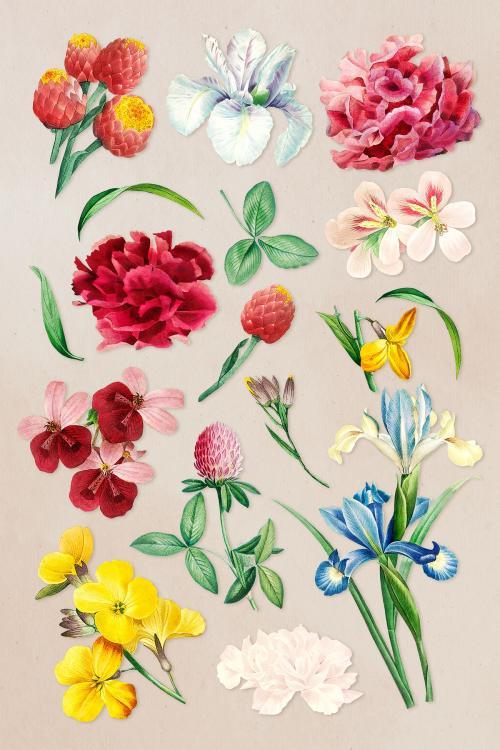 Colorful flower set on a beige background illustration - 2090512