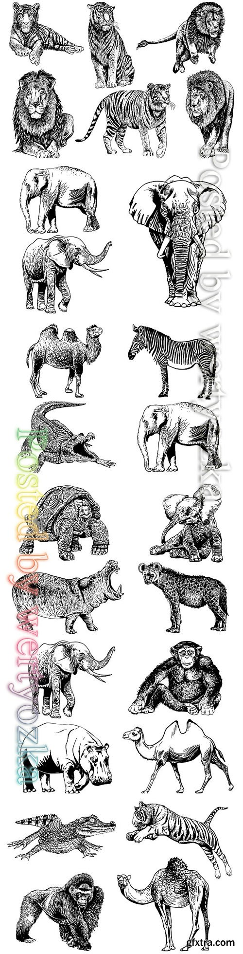 Animals isolated on white vector background