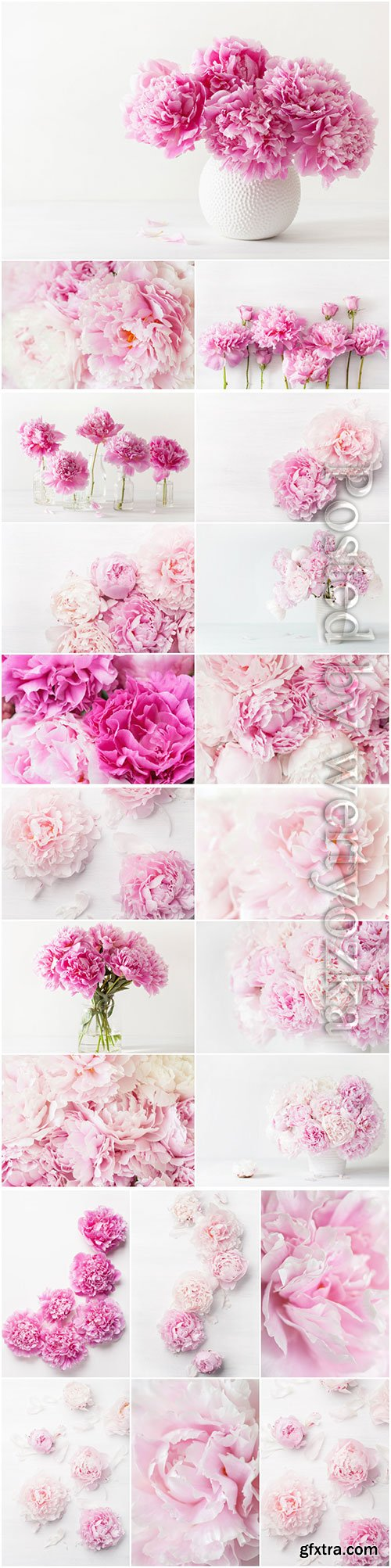 Beautiful peonies beautiful stock photo