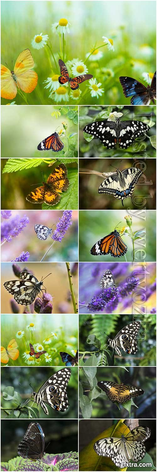 Butterflies set stock photo