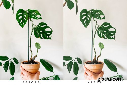 CreativeMarket - 10 Light Botanical Lightroom Presets 5351307