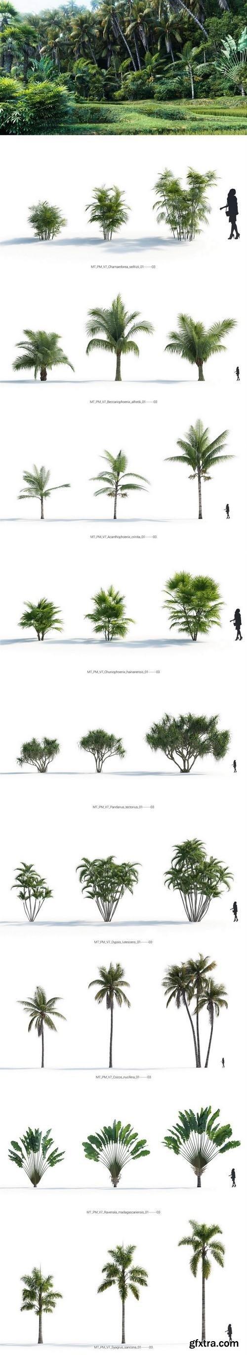 Maxtree - Plant Models Vol 7