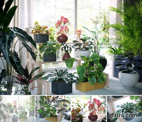 Maxtree – Plants Models Vol.62