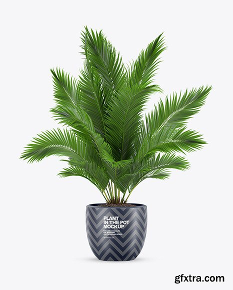 Plant in the Pot Mockup 69845