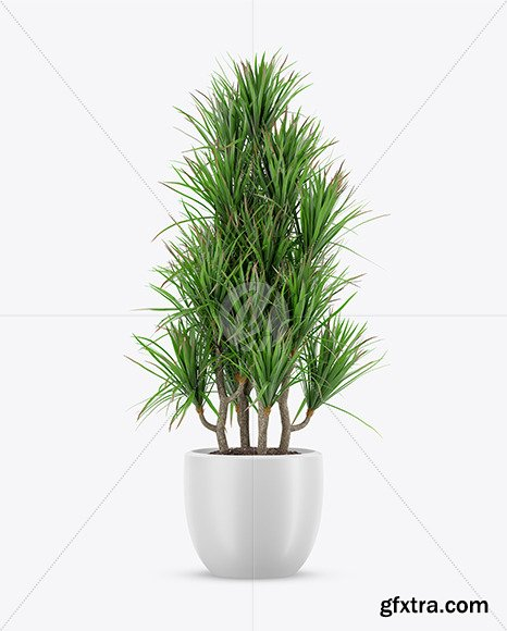Plant in the Pot Mockup 69842
