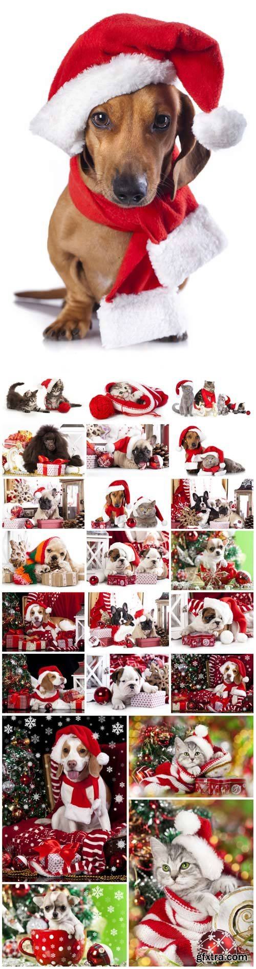 New Year and Christmas stock photos №19