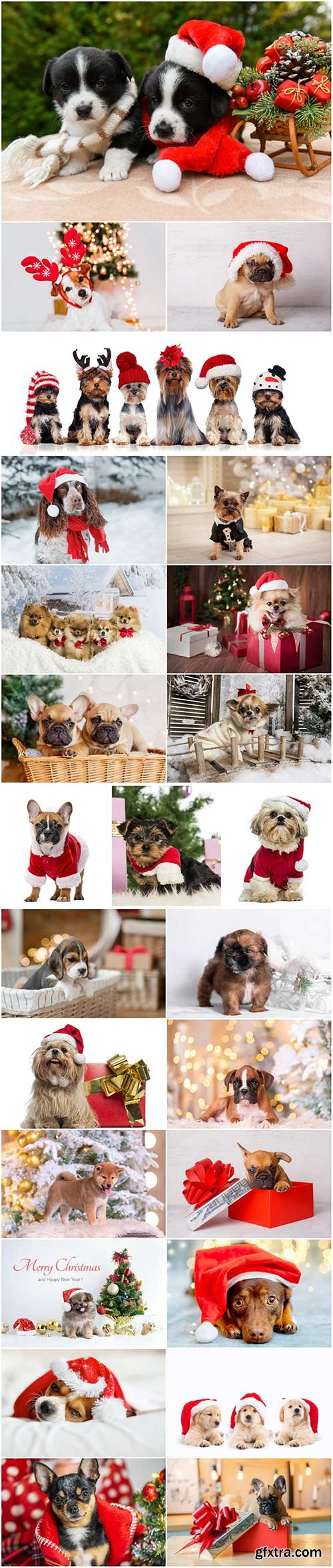 Cute dogs in santa hat set stock photo