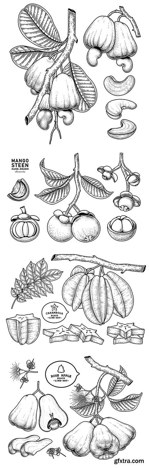 Set of fruit painted elements botanical illustrations