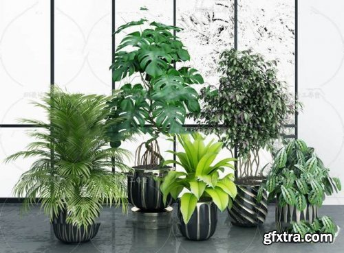 Plants collection 06 3D models