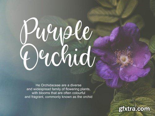 Bright Violet Script Font