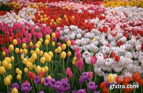 VIZPARK - Real Flowers