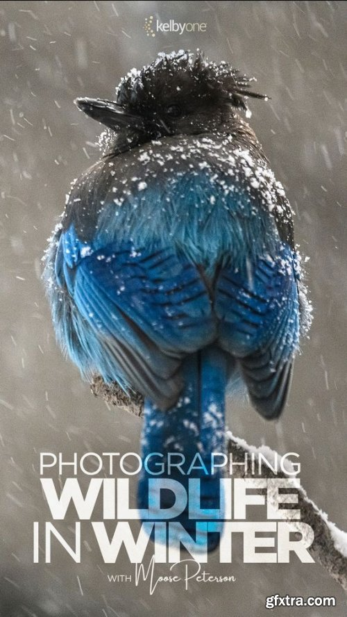 KelbyOne - Photographing Wildlife in Winter