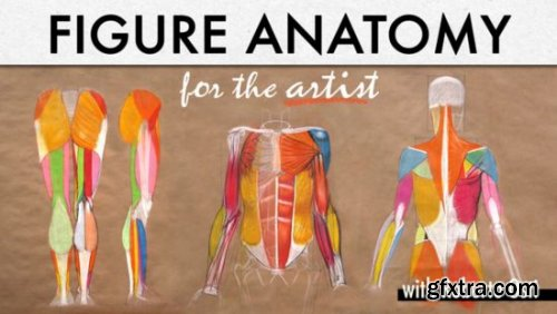 Figure Anatomy for the Artist