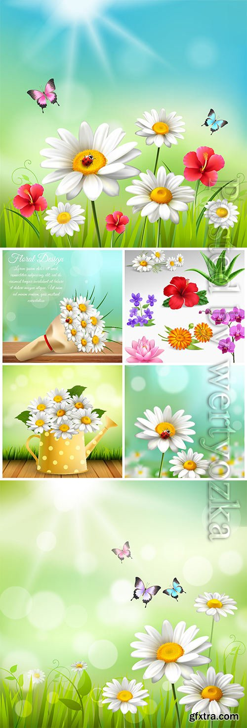 Beautiful flowers, chamomile in vector
