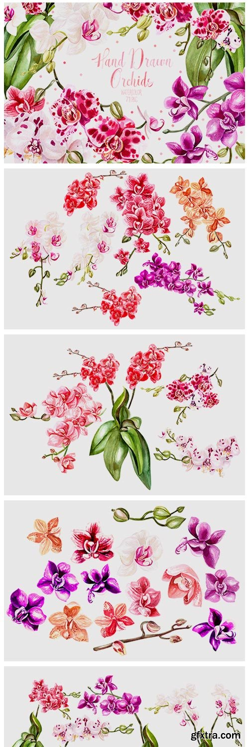 Hand Drawn Watercolor Orchids 320529